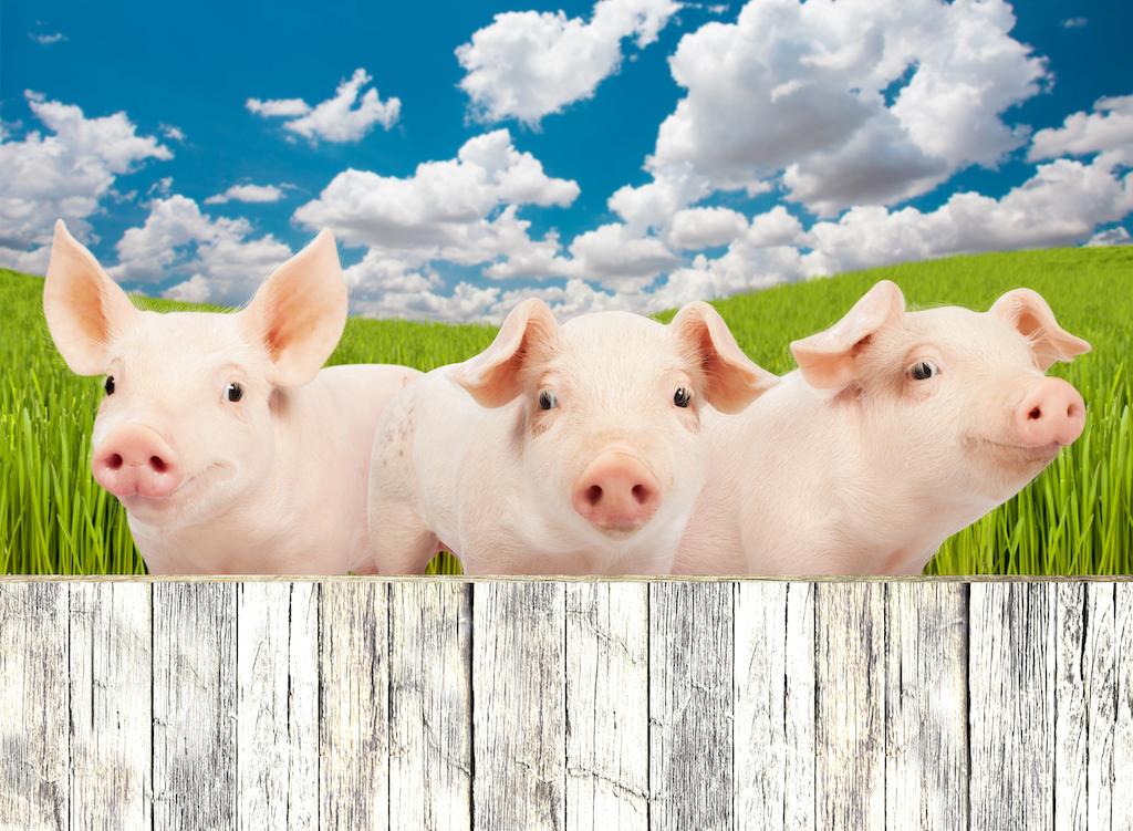 Els Tres Porquets. Enotaberna en Barcelona con alta gastronomía en platillos.